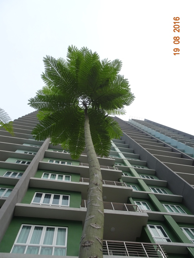 brazilian fern tree 1