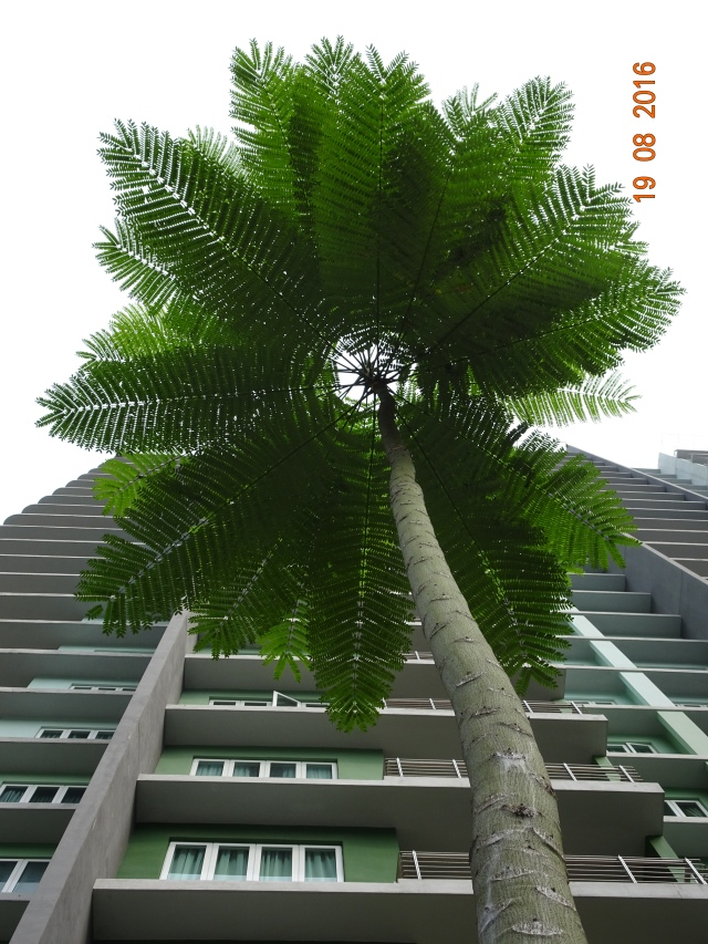 brazilian fern tree 2