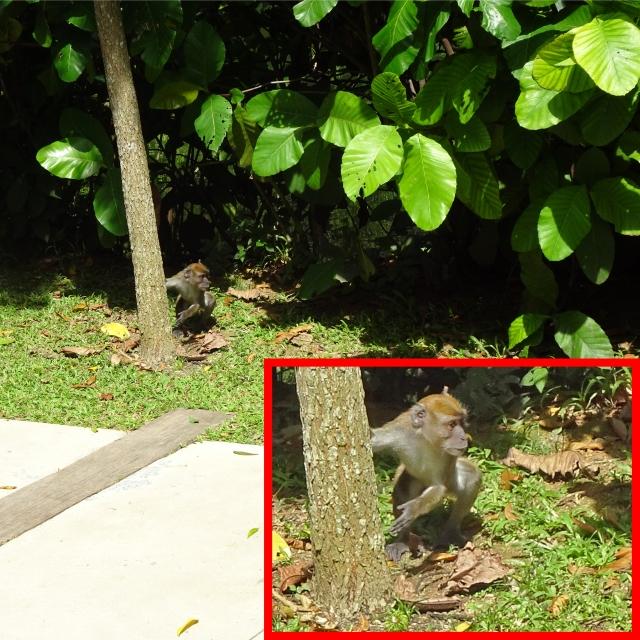 enlarge monkey edit
